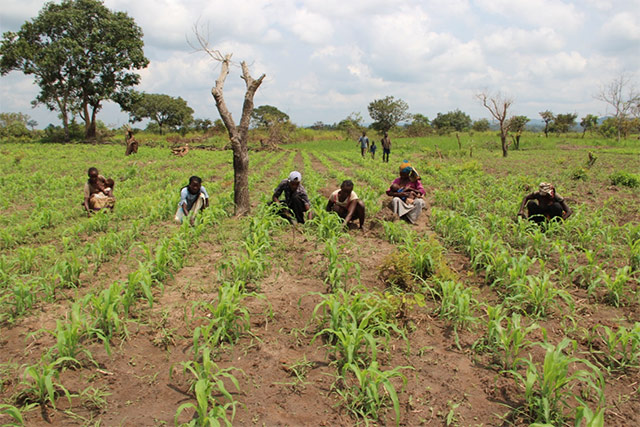 Female Farmers Rebuilding Agriculture In The Central African Republic - African Leadership Magazine